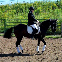 gaited horses can piaffe