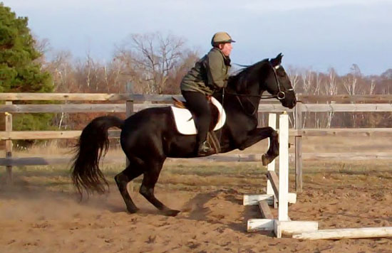 Gaited horses jump too